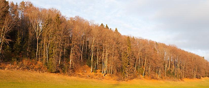 Weg nach Wald