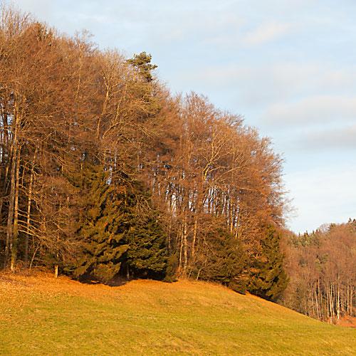 Goldener Winterwald