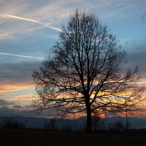 Filigran ist der Baum